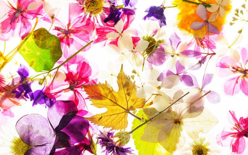 花材イメージ画像